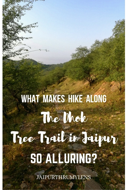 hiking in Jaipur along the dhok tree trail on aravali hills #jaipur #travel #hiking #trekking #outdoors