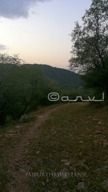trekking-route-in-jaipur-forest-aravali-hills
