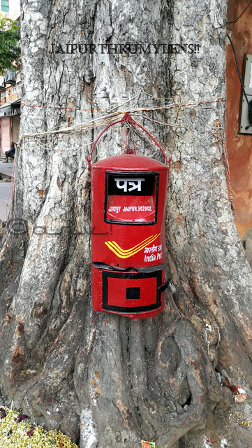 india-post-letter-box-in-jaipur-on-peepal-tree