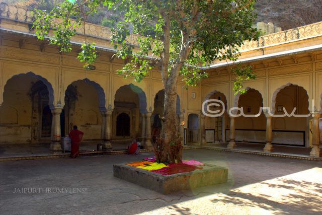 peepal-tree-galta-ji-temple-jaipur