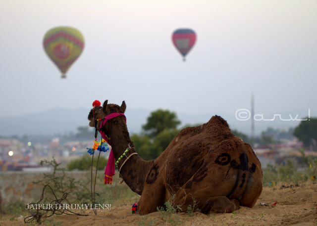 pushkar-mela-photo-blog