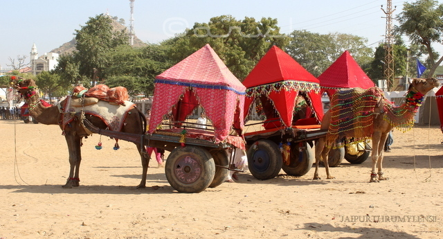 pushkar-fair-camel-cart-ride-photo-blog