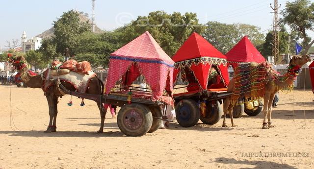 pushkar-fair-camel-cart-ride-photo-blog