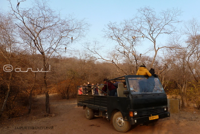 canter-safari-in-ranthambore-national-park
