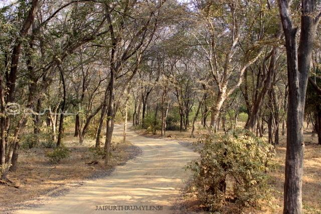 flora-fauna-ranthamore-national-park-aravali-rajasthan
