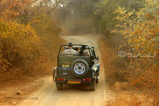 gypsy-safari-ranthambore-booking