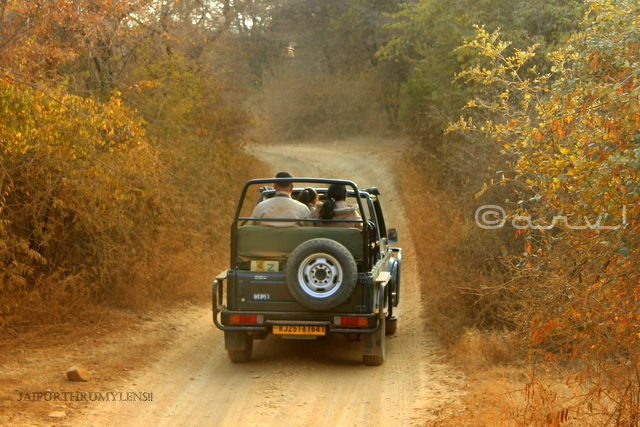 gypsy-safari-ranthambore-booking