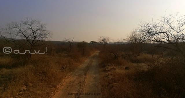 how-to-book-ranthamore-national-park-safari