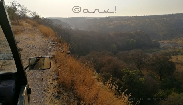 jungle-safari-canter-ranthambore-national-park-rajasthan