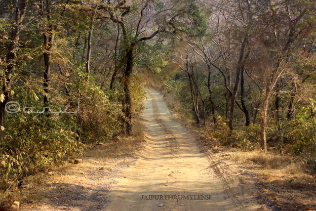 ranthambore-forest-safari-trail