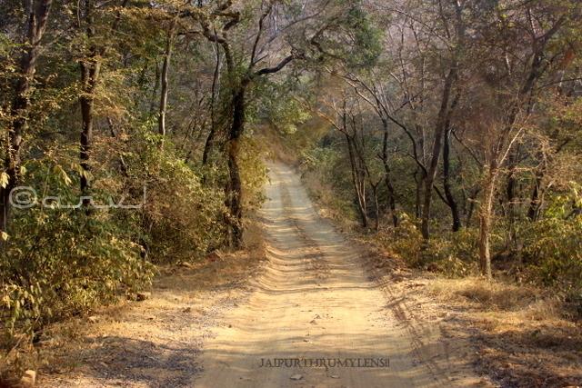 ranthambore-forest-safari-trail