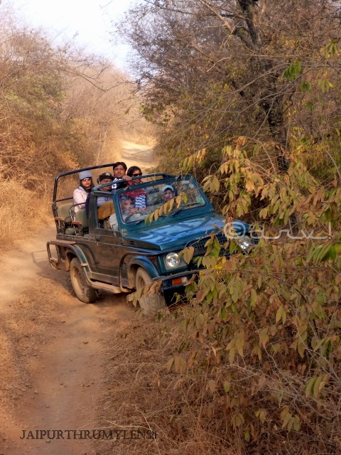 ranthambore-national-park-safari-gypsy-charges