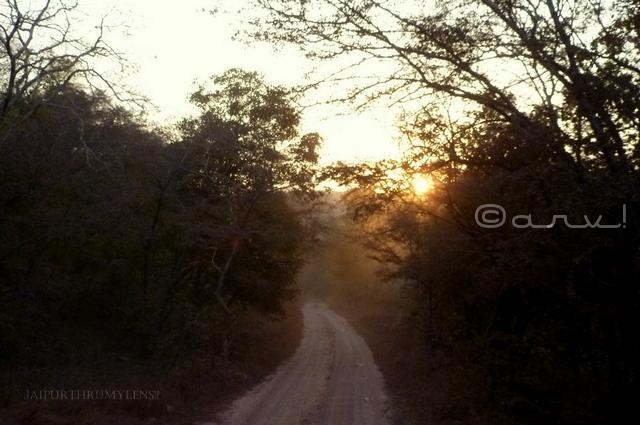 ranthambore-national-park-weather