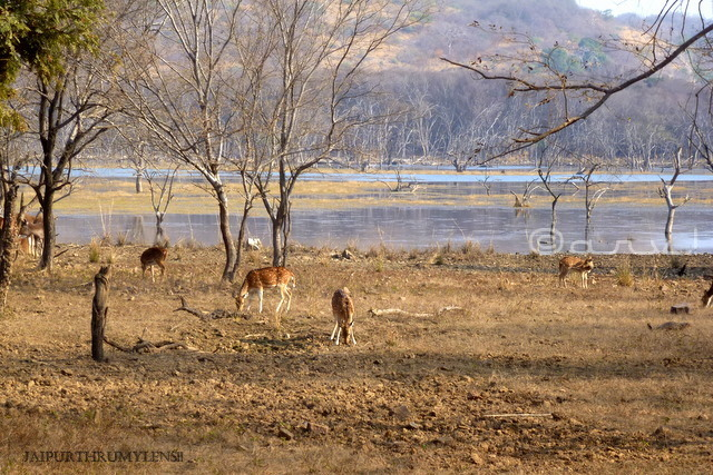 ranthamore-national-park-lodge