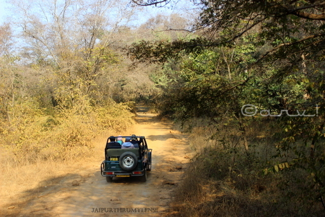 ranthamore-national-park-safari-booking-charges-gypsy-vehicle