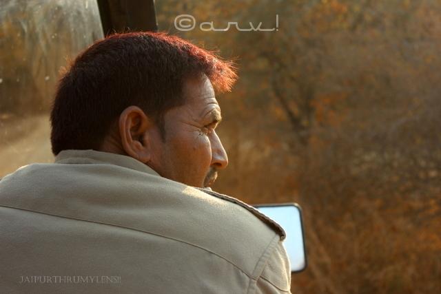 ranthamore-national-park-safari-booking