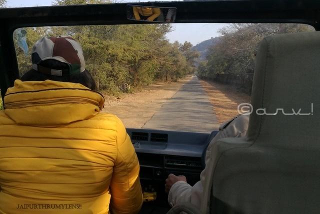 ranthamore-national-park-travel-blog