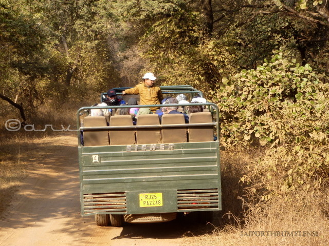 safari-booking-ranthambore-nationla-park