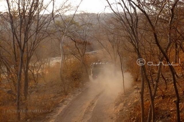 taking-tiger-safari-canter-national-park-ranthambore-india