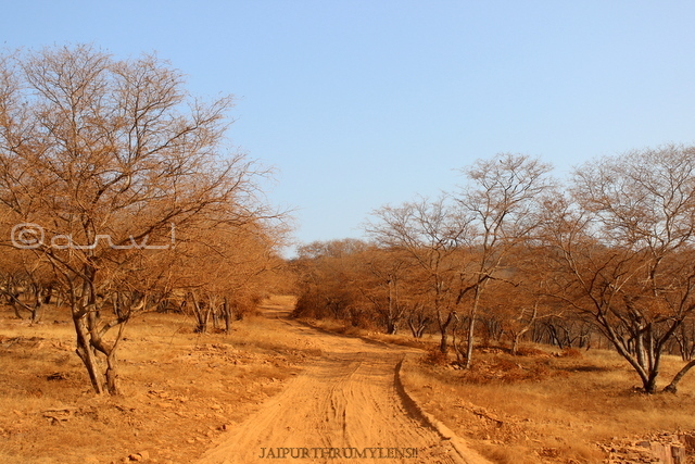 trees-aravali-jungle-tiger-reserve-rajasthan