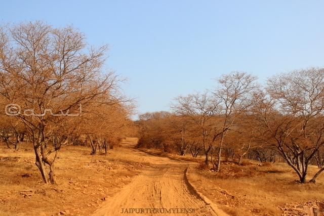 trees-aravali-jungle-tiger-reserve-rajasthan