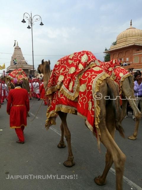 jaipur-teej-festival-camel-tripolia-bazaar