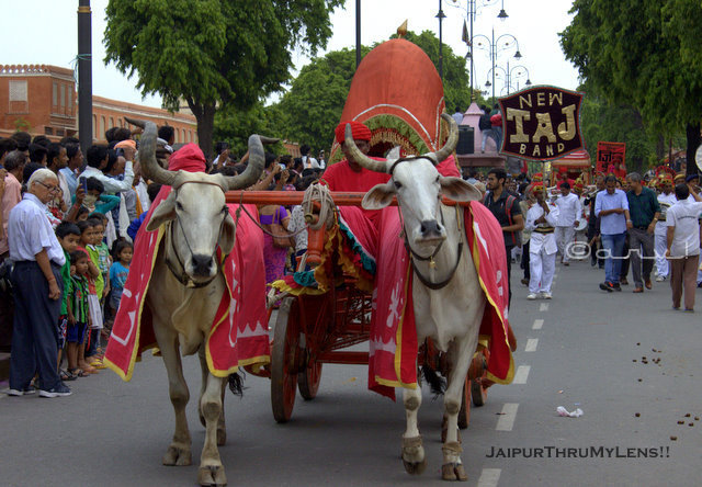 royal-bullock-cart-ride-teej-festival-jaipur