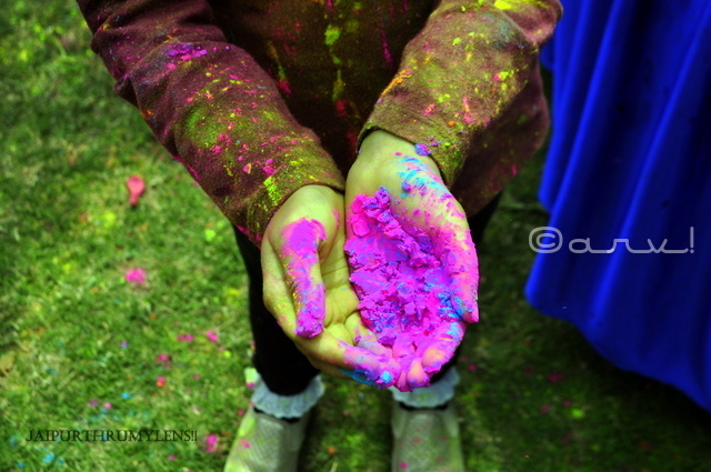gulal-colour-holi-festival-celebration-jaipur-india