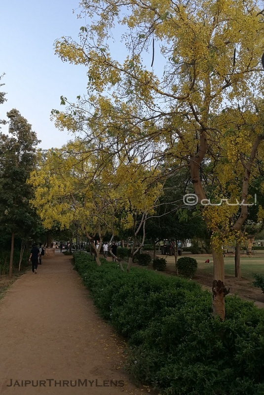 trees-jogging-track-central-park-jaipur