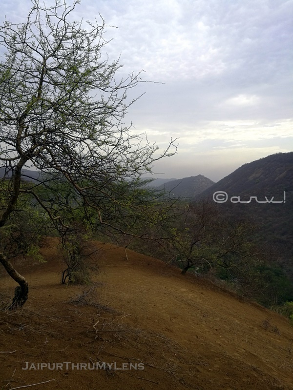 jhalana-forest-fire-jaipur-wild-flora