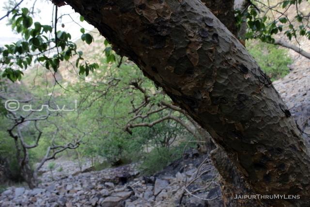 jaipur-trekking-club-hiking-places