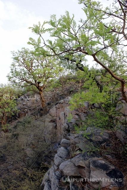 trekking-places-rajasthan-hathuni-kund-jaipur-aravali-hills