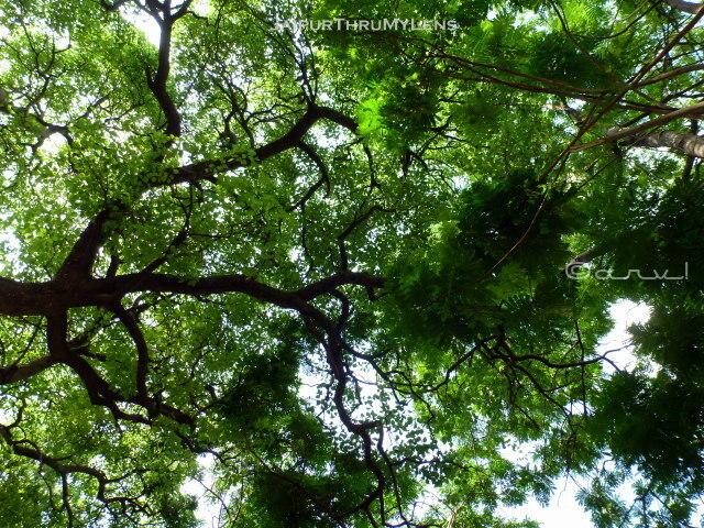 best-gardens-in-jaipur-ramniwas-bagh