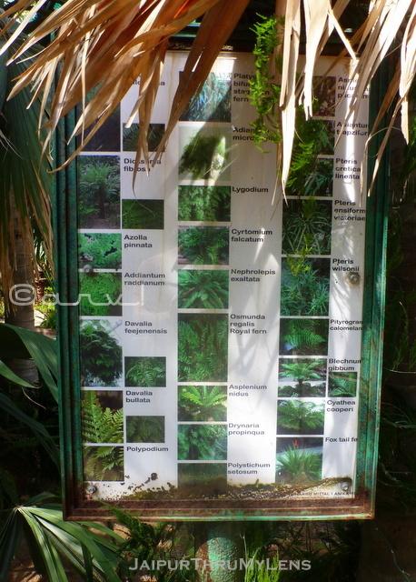 fern-tree-types-indoors-information-ramniwas-bagh-jaipur
