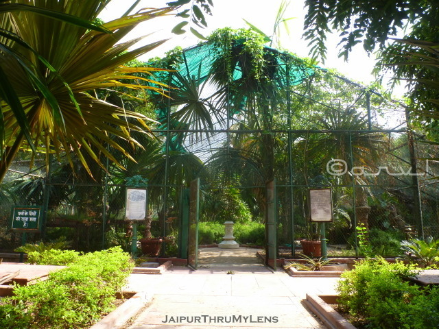 small-fern-garden-layout-ramniwas-bagh-sawan-bhado-park-jaipur
