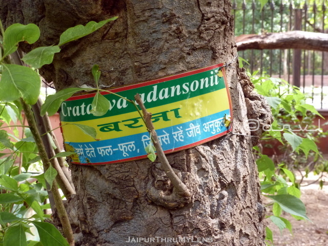 tree-scientific-names-hindi-ramniwas-bagh-jaipur