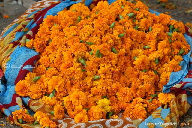 marigold-flower-india-genda-phool-photo