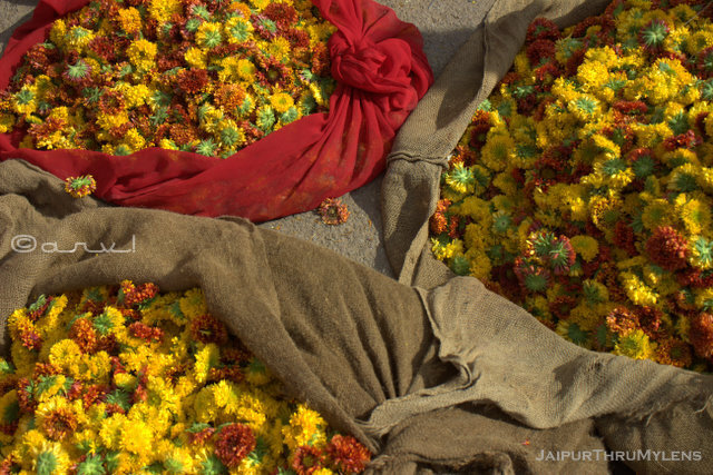 marigold-flower-varities-market-jaipur-india