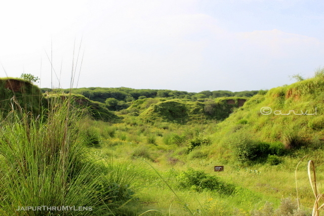 chambal-like-ravines-restoration-project-india-pradip-krishen-kishan-bagh