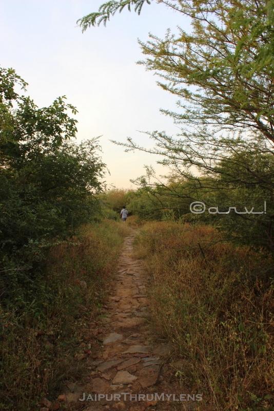 jaipur-trekking-in-jungle-solo