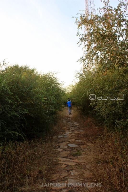 jhalana-trekking-in-jaipur-forest-dhok-trees