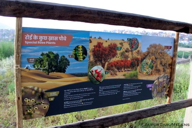 roee-plants-thar-desert-kishan-bagh-jaipur-information