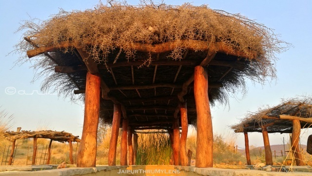 thatched-roof-rajasthan-vachellia-nilotica-babool-tree-thorns