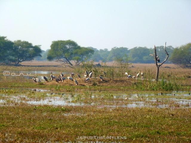 keoladevi-ghana-bird-sanctuary-bharatpur-weekend-getaway-jaipur